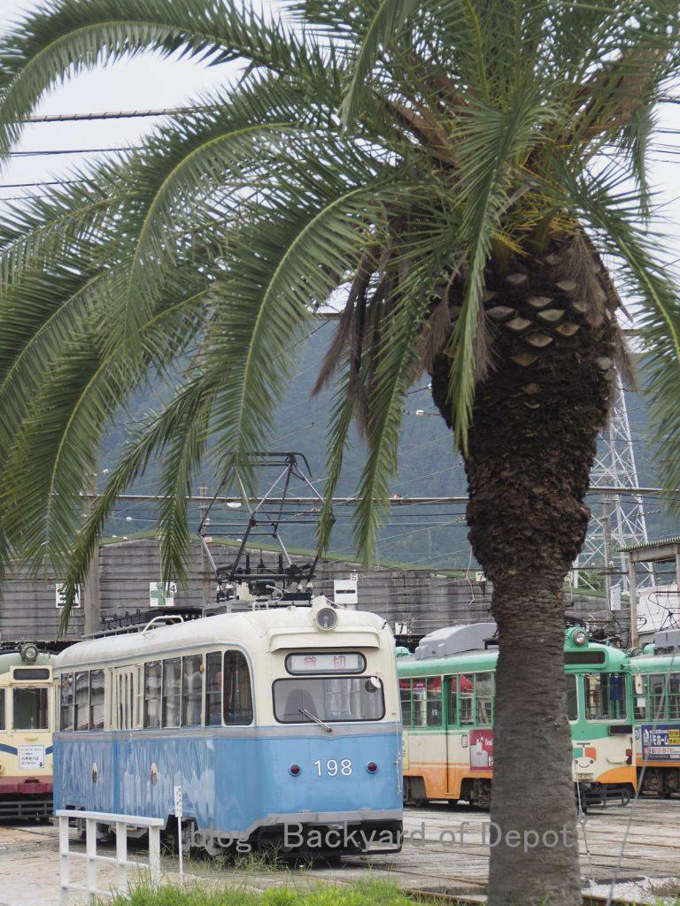 ソテツの木を眺めながら憩うオスロ電車 / Cycads and Northern-europian tram.